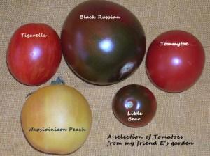 E's tomatoes